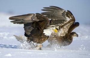 Amazing wildlife photo by David Bishop