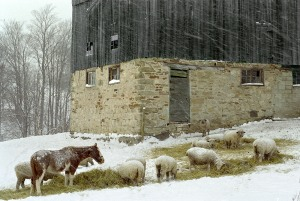 Snowy country landscape photo by Telfer Wegg