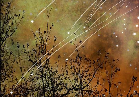 image by Alyzen Moonshadow taken from Blyth Festival website.