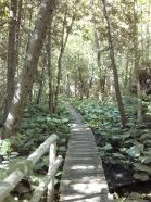 Maitland Trail … another great place to explore flora and fauna
