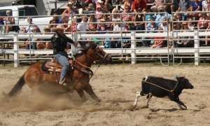 Break-a-way Roping